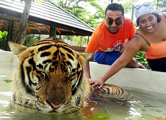 My Tryst with the Tigers in Thailand - Global Fashion Street