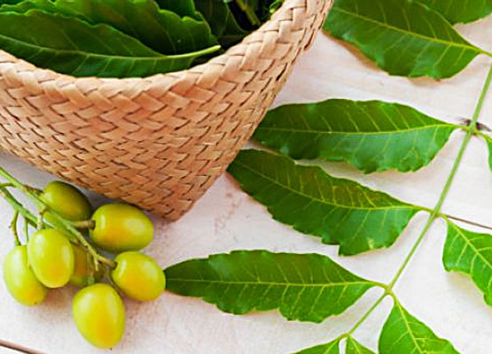 5 Incredible Benefits of Neem - Global Fashion Street