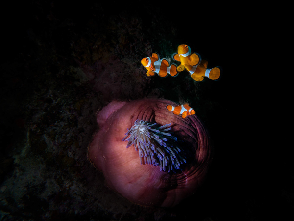 Scuba Diving - Most Amazing Underwater Pictures by Duncan Heuer - Global Fashion Street