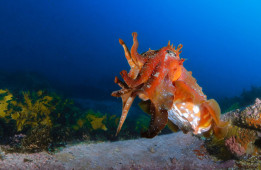 11 Reasons to go Underwater Diving by Duncan Heuer